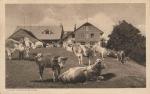 Gross-Brunnersberg (3743)
