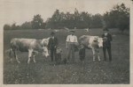 Männer mit Kühen